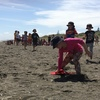 Thumbnail: Beach Education Day