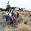 Planting at beach