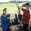 Explorers Pharazyn planting