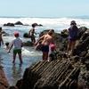 Kiritehere rock pools 2