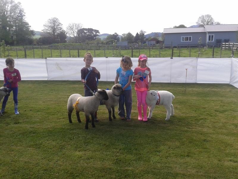 Lamb Group2