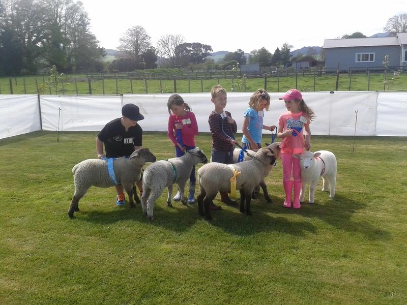 Lamb Group1