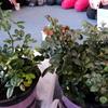 Thumbnail: Cut Flower Garden
