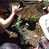 Thumbnail: New Garden  -  The Cottage Garden