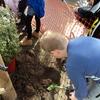 Thumbnail: Sandpit planting