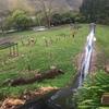 Thumbnail: Whakāhua