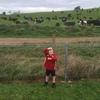 Thumbnail: Looking at cows!
