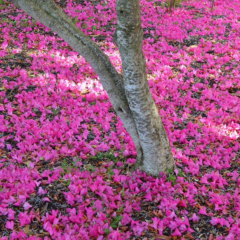 Dsc 3586 Pink Carpet