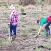 Tree Planting May 19 H